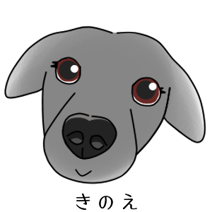 [日々、きのタロ。]沖縄で保護犬の里親になった話(3)保護犬譲渡会と譲渡犬説明会に参加してみた