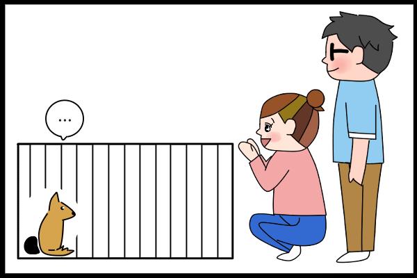 [日々、きのタロ]沖縄で保護犬の里親になった話(3)保護犬譲渡会に参加してきのえに出会う